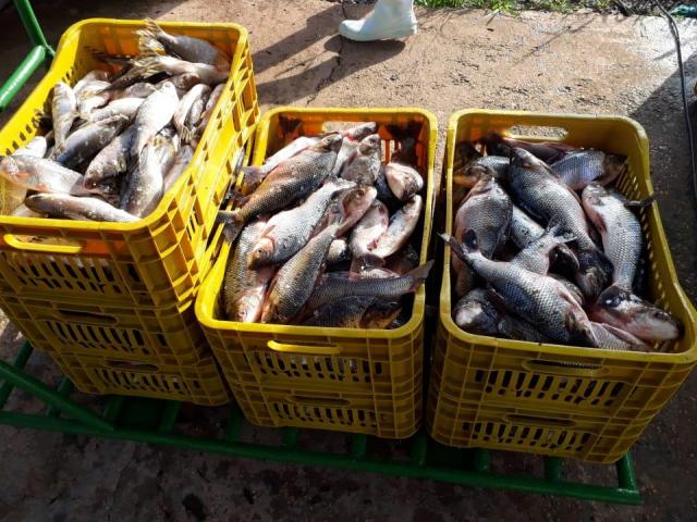 Mesa Brasil no Amazonas recebe cerca de 25 toneladas de pescado