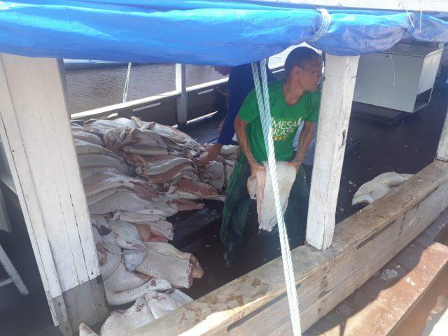 Mesa Brasil no Amazonas recebe cerca de quatro toneladas de Pirarucu